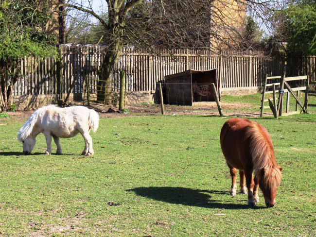 Hounslow Urban Farm Ponies