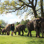 Animal Spotting at ZSL Whipsnade Zoo