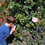 Wandering Around Kew Gardens