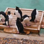 A Day Out at ZSL Whipsnade Zoo