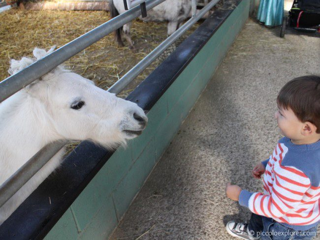 Animal interaction at Bocketts Farm Park Surrey