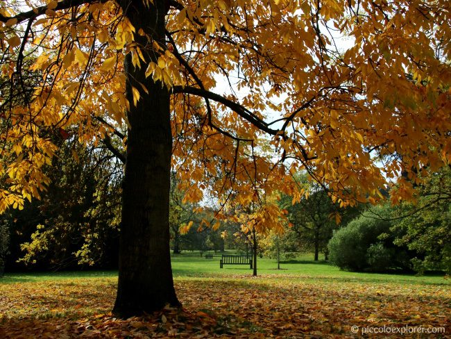 Autumn Foliage at Kew Gardens
