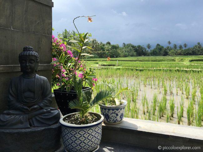Rice Paddies by LUXE Villas Ubud, Bali