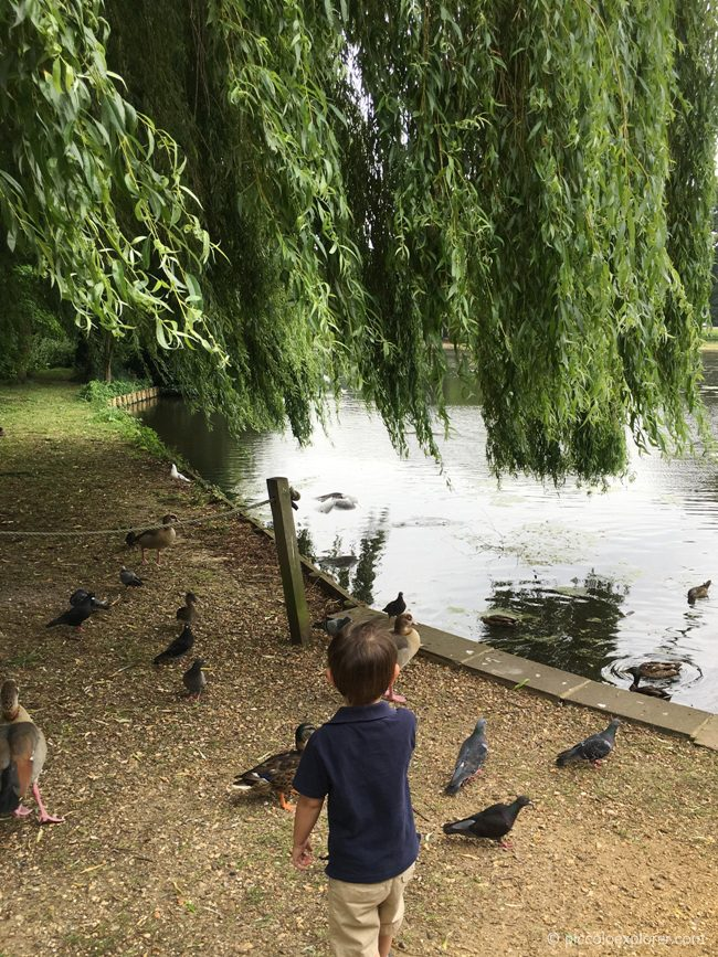 Feeding birds at Osterley House