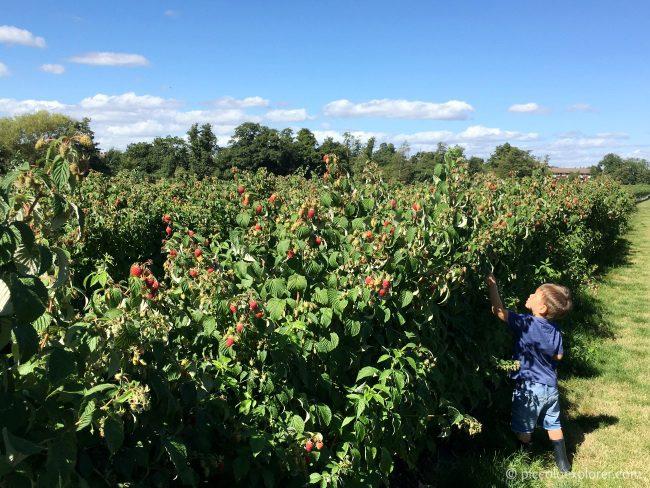Garsons Pick Your Own Farm Surrey