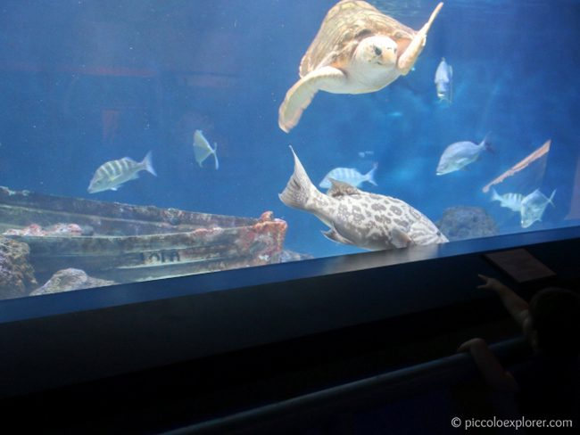 Sea Turtle at Birch Aquarium at Scripps La Jolla CA