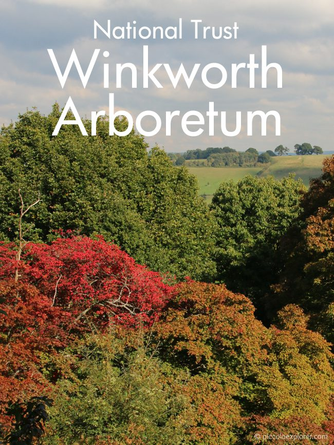 Pin It - National Trust Winkworth Arboretum, Surrey