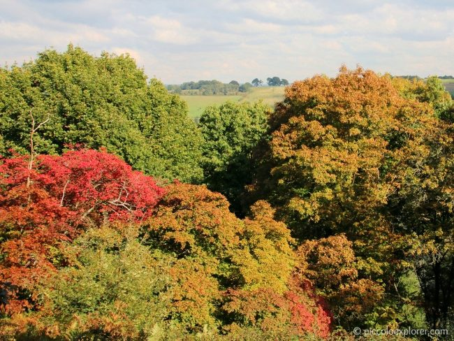 National Trust Winkworth Arboretum, Surrey