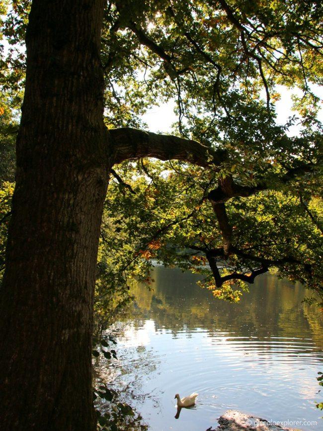 National Trust Winkworth Arboretum, Surrey