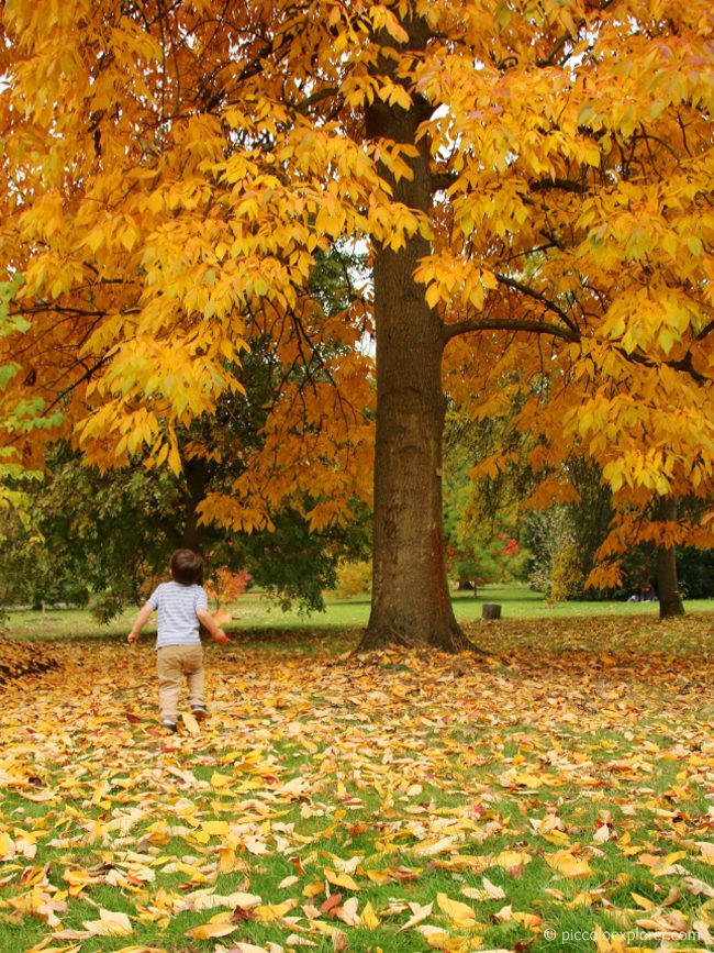 Autumn Kew Gardens London