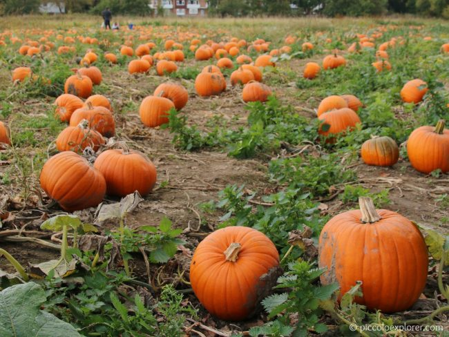 Garsons Farm Pumpkin Patch Surrey
