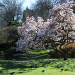 Best Places to See Spring Flowers in London