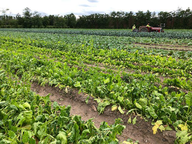 Garsons Pick Your Own Farm