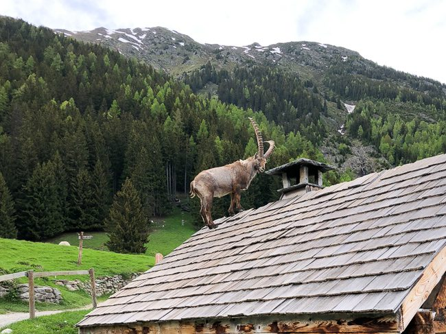 Merlet Animal Park, Les Houches